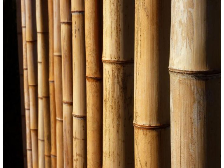 17 best images about bamboo poles on pinterest san diego for Uses for bamboo canes