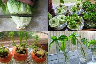 10 vegetales que sólo deberás comprar una vez si aprendes estos trucos para regenerarlos  ((Lo hare))