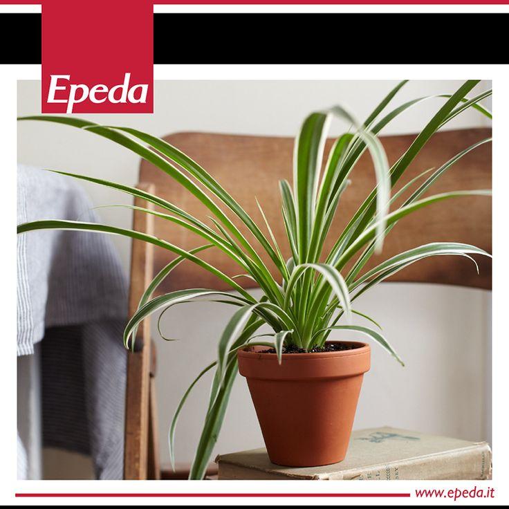 17 migliori idee su piante della camera da letto su - Piante che purificano l aria in camera da letto ...