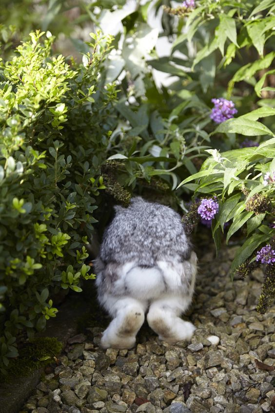 Bye bye, bunny