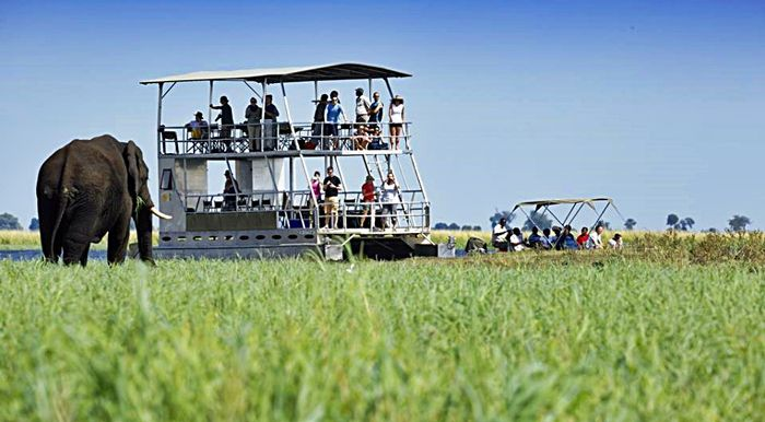 A budget safari along the Chobe River in Botswana exceeds all expectations for a self-declared 'tourist snob'.