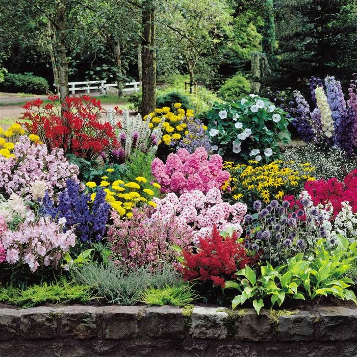 Gardens4you online garden centre for all your hedges for Backyard plant design ideas