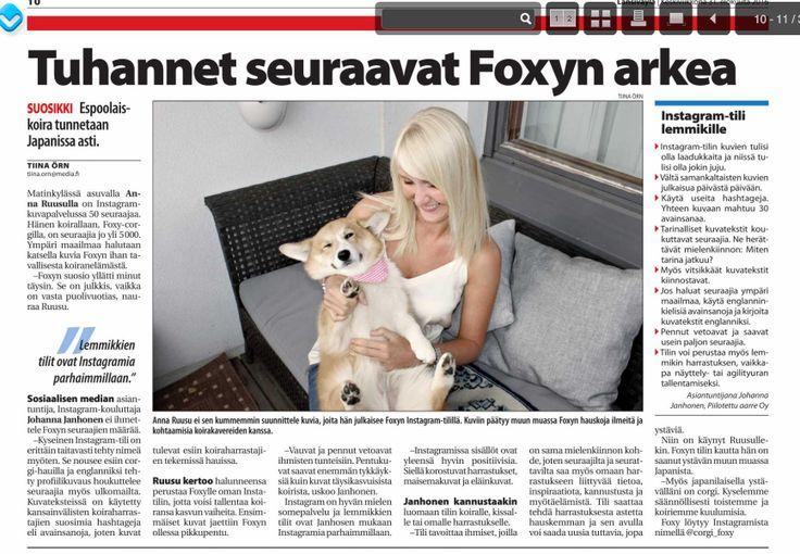 Johanna Janhonen kommentoi Foxy-corgin Instagram-suosiota Länsiväylässä 31.8.2016.