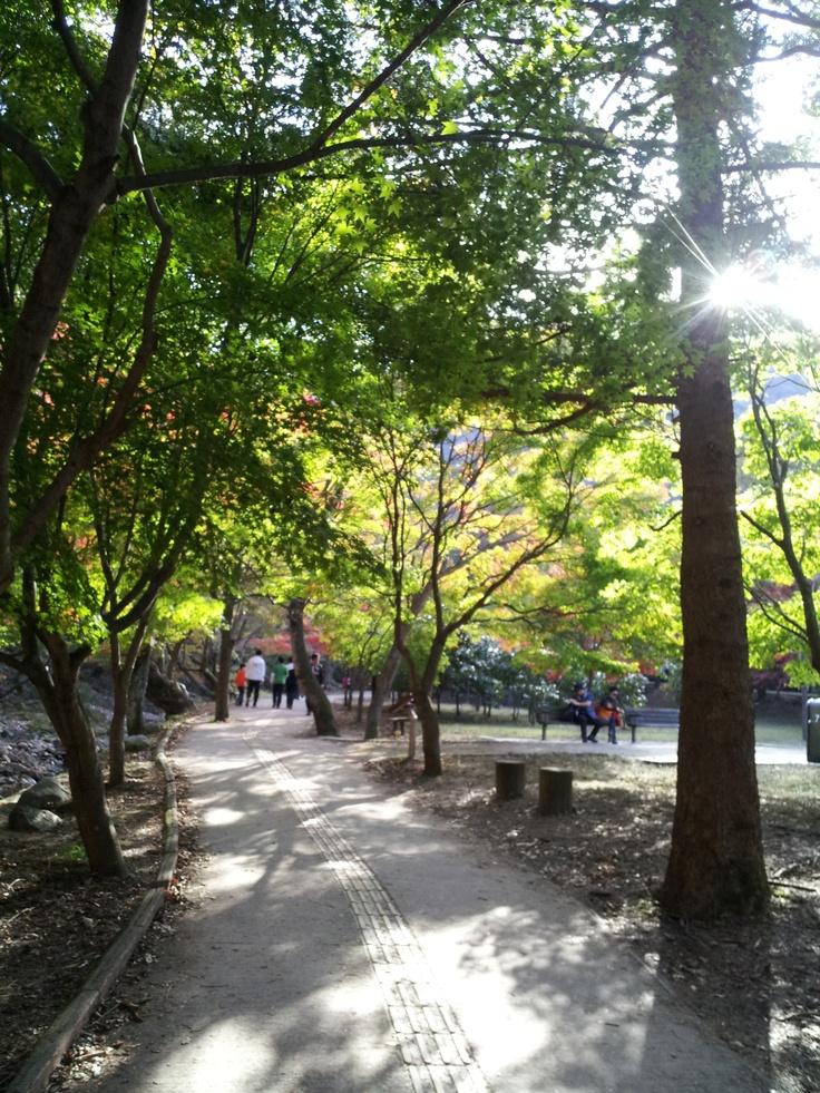 햇살 가득한 내장산 산책로