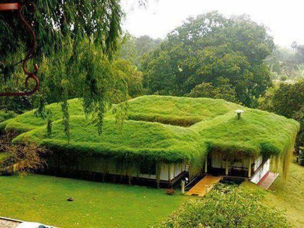 Les 25 meilleures id es de la cat gorie toit vegetal sur for Maison toit vegetal