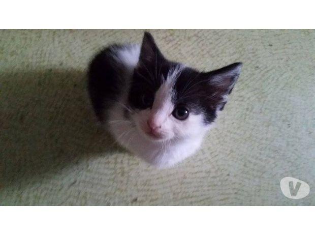 A adopter, LIO, chatonne N&B, 3 mois Adoption & don animaux Paris 5ème ardt - 75005 avec Vivastreet
