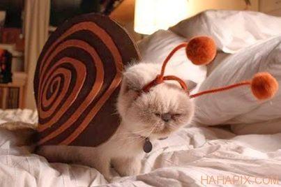 Cat wearing snail costume