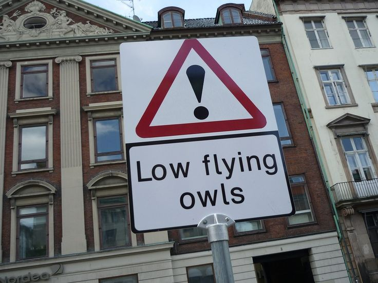 ! Low Flying Owls
