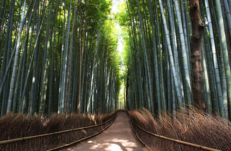 Arashiyama – Cavan Flynn