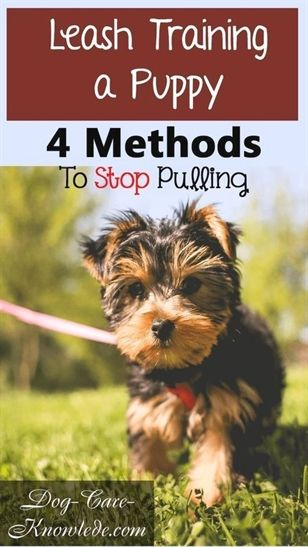 Dog Training Jingle Bells Dog Training Recall Zoom Room Dog