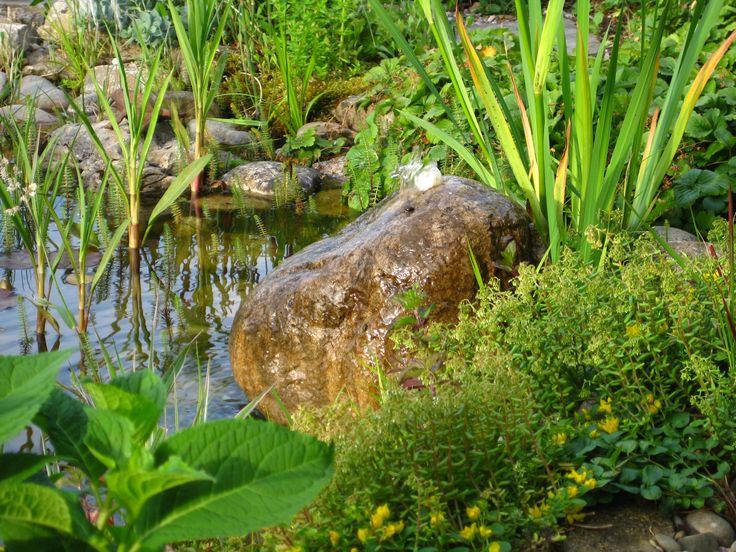 19 besten Gartenteich Bilder auf Pinterest Bougainvillea, Garten