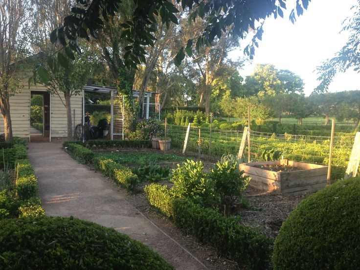 Late September.  A view from the Potager (Vegetable) Garden across the buxus nursery. www.merribee.com.au