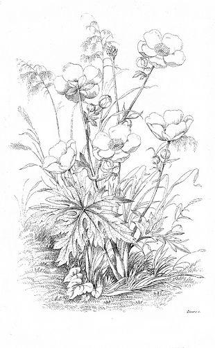 free printable art, reworked: botanical floral