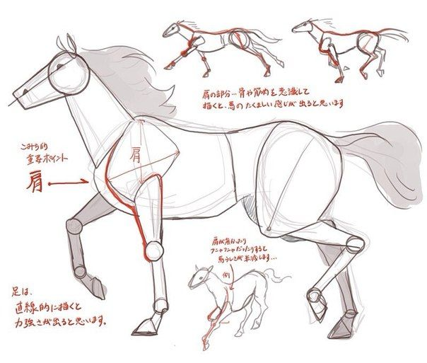 278 best how to draw animals images on pinterest draw animals horse anatomy animal anatomy how to draw horses draw animals animal design horses art tutorials card designs manga ccuart Image collections