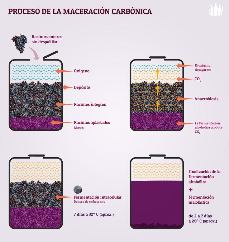 Proceso de la maceración carbónica