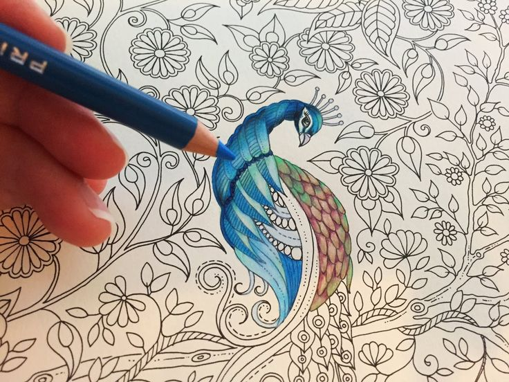 Coloring Tutorial: Peacock (Part 1/3)