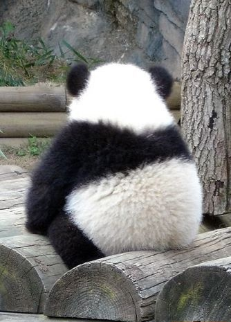 I want a baby panda.  .  .so cute.