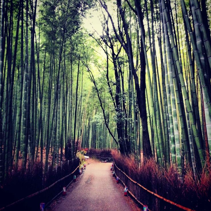 Into A Bamboo Forest - - This Beautiful Day // Powered by chloédigital
