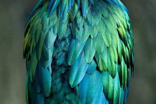 feathers Turquoise Blue, Parrots, Birds Of Paradis, Bluegreen, Blue Green, Central Parks, Colors Combinations, Beautiful Birds, Feathers