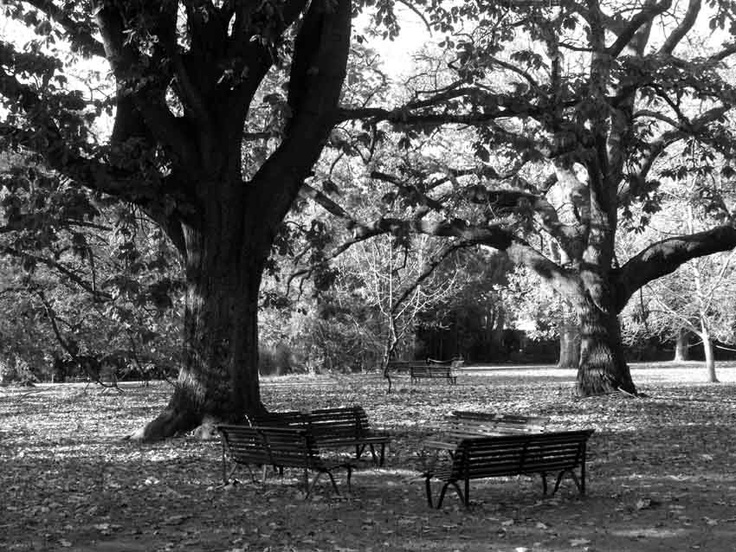 Meeting in Progress, Royal Botanic Gardens, Melbourne