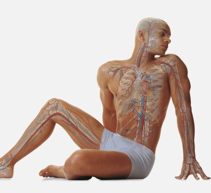 Организм человека — это великолепная самообновляющаяся система, но даже она не может нормально функционировать, не имея нужных материалов.