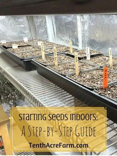 Starting seeds indoors can seem intimidating: There are a lot of materials to gather, and the process seems a little complicated. But have no fear, this step-by-step guide includes useful tips and details and will help demystify seed starting.
