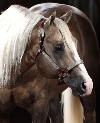 Wimpys Little Step... Beautiful Reining horse  this horse has made more money than I will ever see. Love this Horse<3