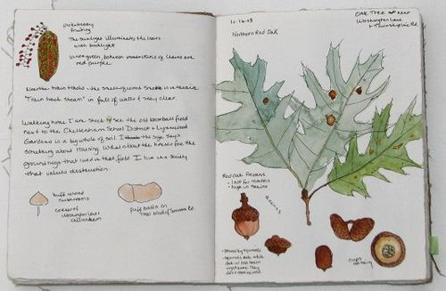 Nature Journal Writing Prompts