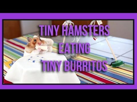 Tiny Hamsters Eating Tiny Burritos Is Exactly What It Sounds Like