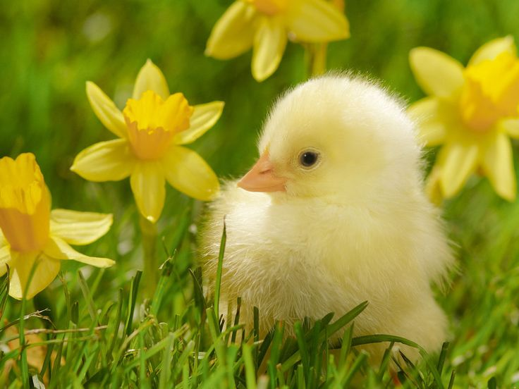 17 Best images about Animals on Pinterest | Wallpapers ...