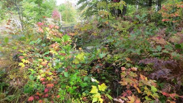 The fall colours have just started