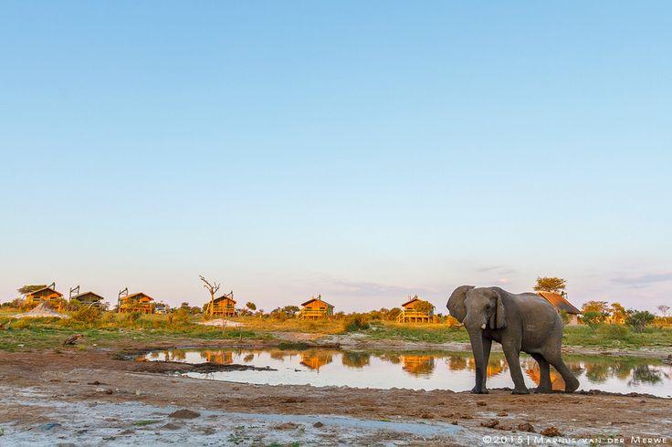Elephant Sands by Marnus van der Merwe on 500px