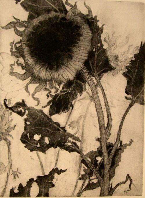 sun floraArtists, Art Gardens, Art Inspiration, Flower Art, Sunflowers, Katy Degroot, Botanical, Intaglio Prints, Dead Flower