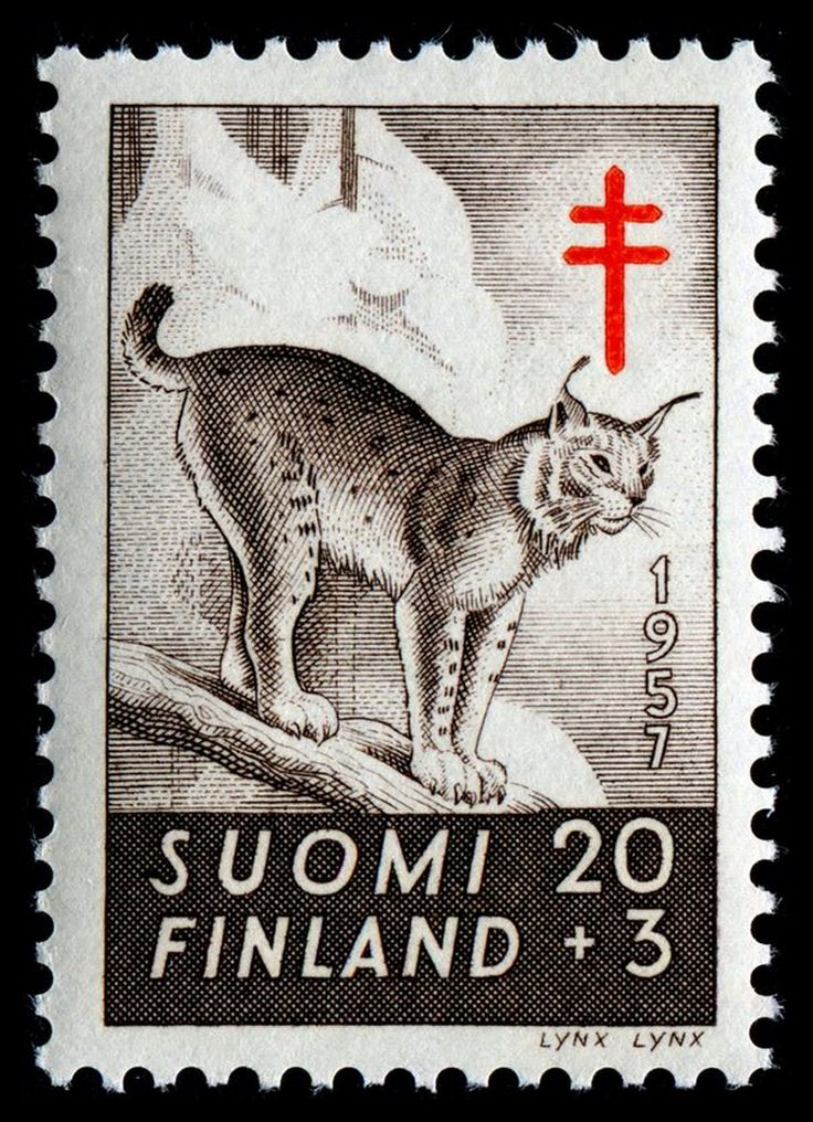 Eurasian lynx (Lynx lynx), semi-postal (charity) stamp designed by Signe Ham Hammarsten-Jansson, engraved by Reijo Achrén, and issued by Finland on September 5, 1957 to benefit anti-tuberculosis funds, Scott No. B143