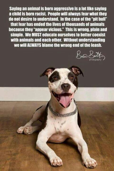 Cesar Millan's Pit Bull, 'Daddy'... says it all. ~ Change of Heart Pit Bull Rescue ~ http://www.cesarsway.com/dog-rescue/rescue-stories/Change-of-Heart-Pit-Bull-Rescue ~ Pit Bulls used to be 'nanny' dogs... but those jaws?!!! Education & supervision is ke