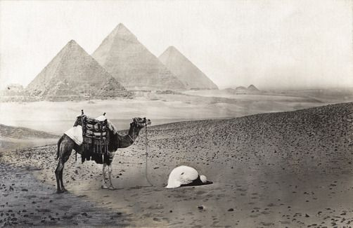 "lasmicrofisuras: "" ""A man kneels in prayer next to his camel near the pyramids of Giza."", 1910s Gizeh, Egypt. A. W. CUTLER """