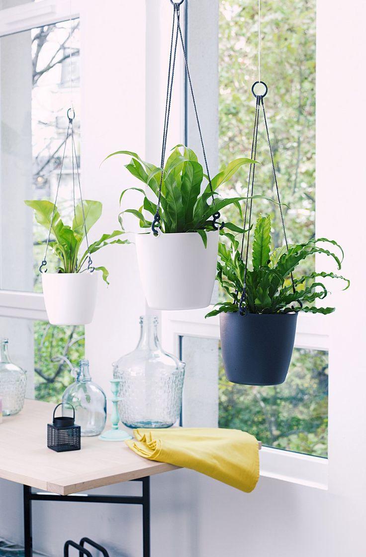 17 meilleures id es propos de pots suspendus sur pinterest pots de cuisin - Porte plante suspendu ...