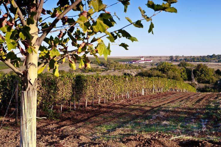 Платаны и виноградники. Долина Лефкадия