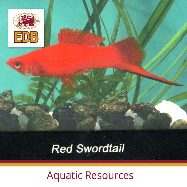 23 best ornamental fish images on pinterest freshwater for Ornamental fish tank