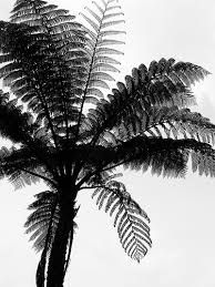 Image result for nz bush silhouette