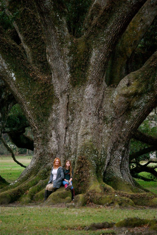 HUGE Oak Tree!