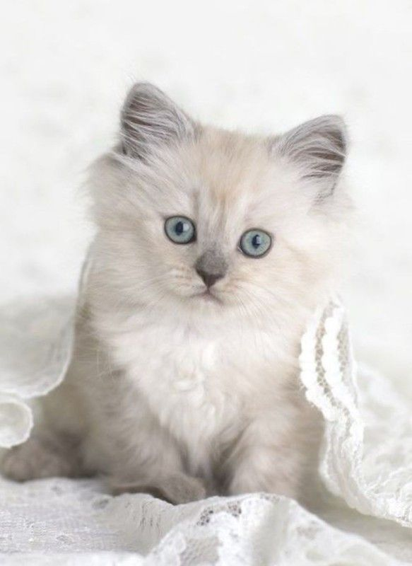 adorable chaton                                                       …