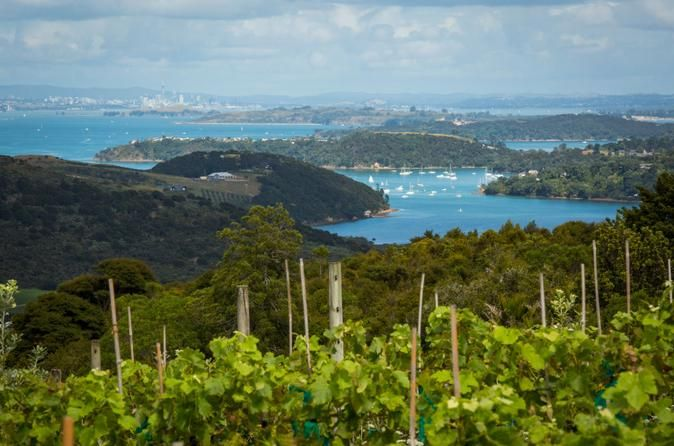 The Best of Waiheke: Ziplining, Wine Tasting and Vineyard Lunch Experience the best of Waiheke on a full-day tour that combines a morning of high-flying zipline adventure with an afternoon sampling the delicious wines and foods of the fertile island. Expert guides lead your zipline adventure and show you how to soar through the air. Afterward, celebrate with lunch and wine tasting at a premium vineyard, followed by two more wine tastings and visits to an olive oil estate and a...