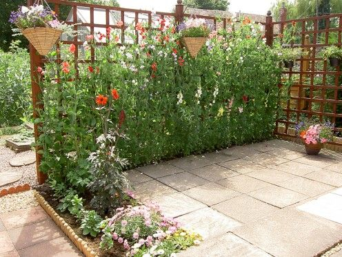 I absolutely love this trellis garden. Thinking about making one for my yard.