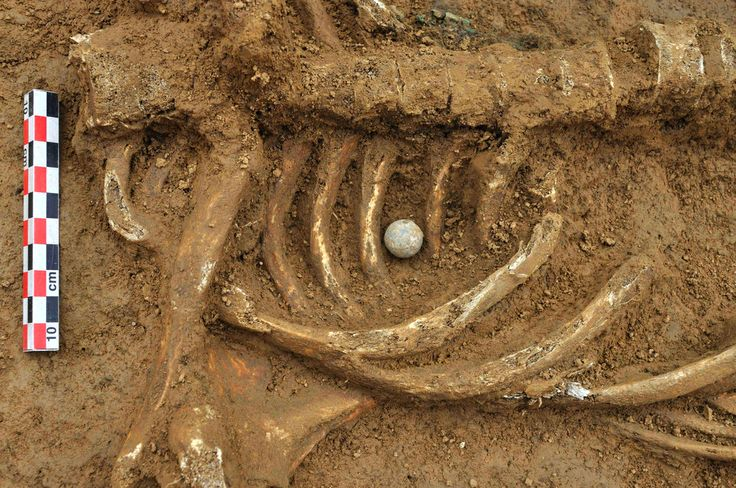 Napoleonic Soldiers Remains Buried In Belarus.  In this photo made available on Friday, June 15, 2012, and released by the Archeological Service of the Belgian province of Brabant Wallon the skeleton of a soldier with the spherical musket bullet that felled the soldier between his ribs is pictured, found at the Waterloo battlefield, in Waterloo, Belgium on Monday, June 5, 2012.