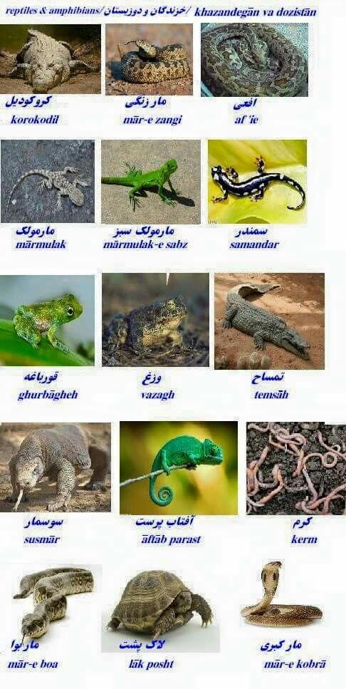 Reptiles and Amphibians in Farsi