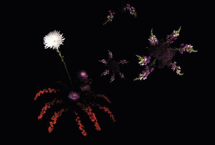 Das Korallröschen explodiert, die Goldrute rieselt vom nachtschwarzen Himmel. Die Künstlerin Sarah Illenberger sorgt für das schönste Feuerwerk zu Silvester.