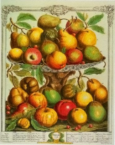 Still love the classic 12 months of fruit by Robert Furber! Google Image Result for http://www.vam.ac.uk/users/sites/default/files/album_images/42355-large.jpg