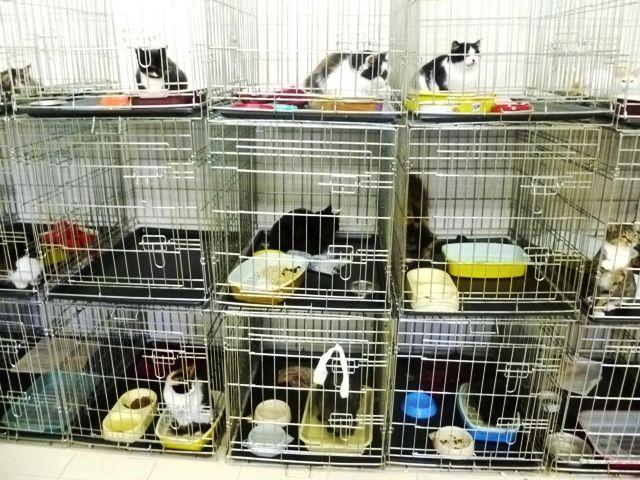 для больных кошек и такие же клетки для карантина, ограждения каждой клетки с трех сторон