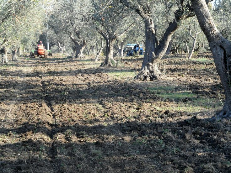 ACTIVITIES OF BIODYNAMIC AGRICULTURE FOR THE FUTURE